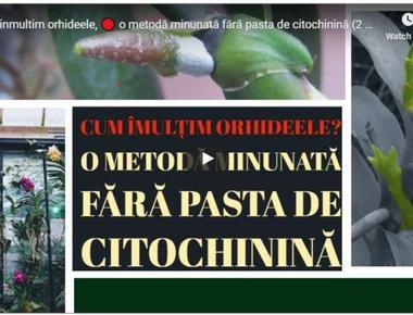 Cum inmultim orhideele, o metodă minunată fără pasta de citochinină (2 minute)