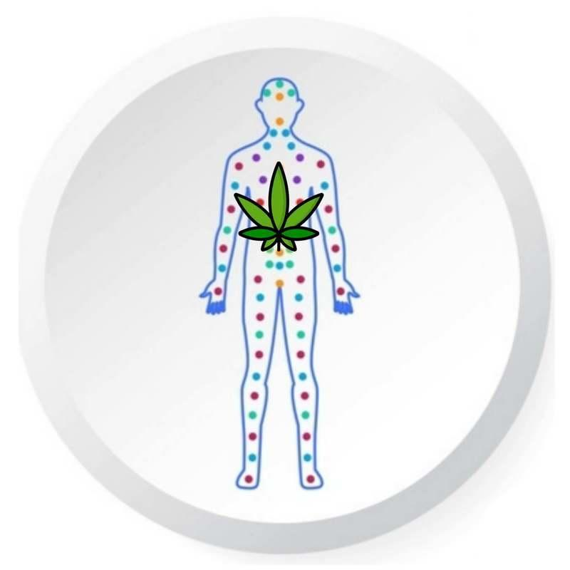 Effects of cannabis edibles on the body