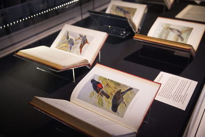 Books in a showcase featuring illustrations of birds.