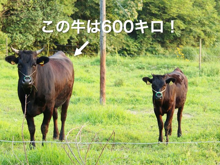 もう1頭の牛の体重は?