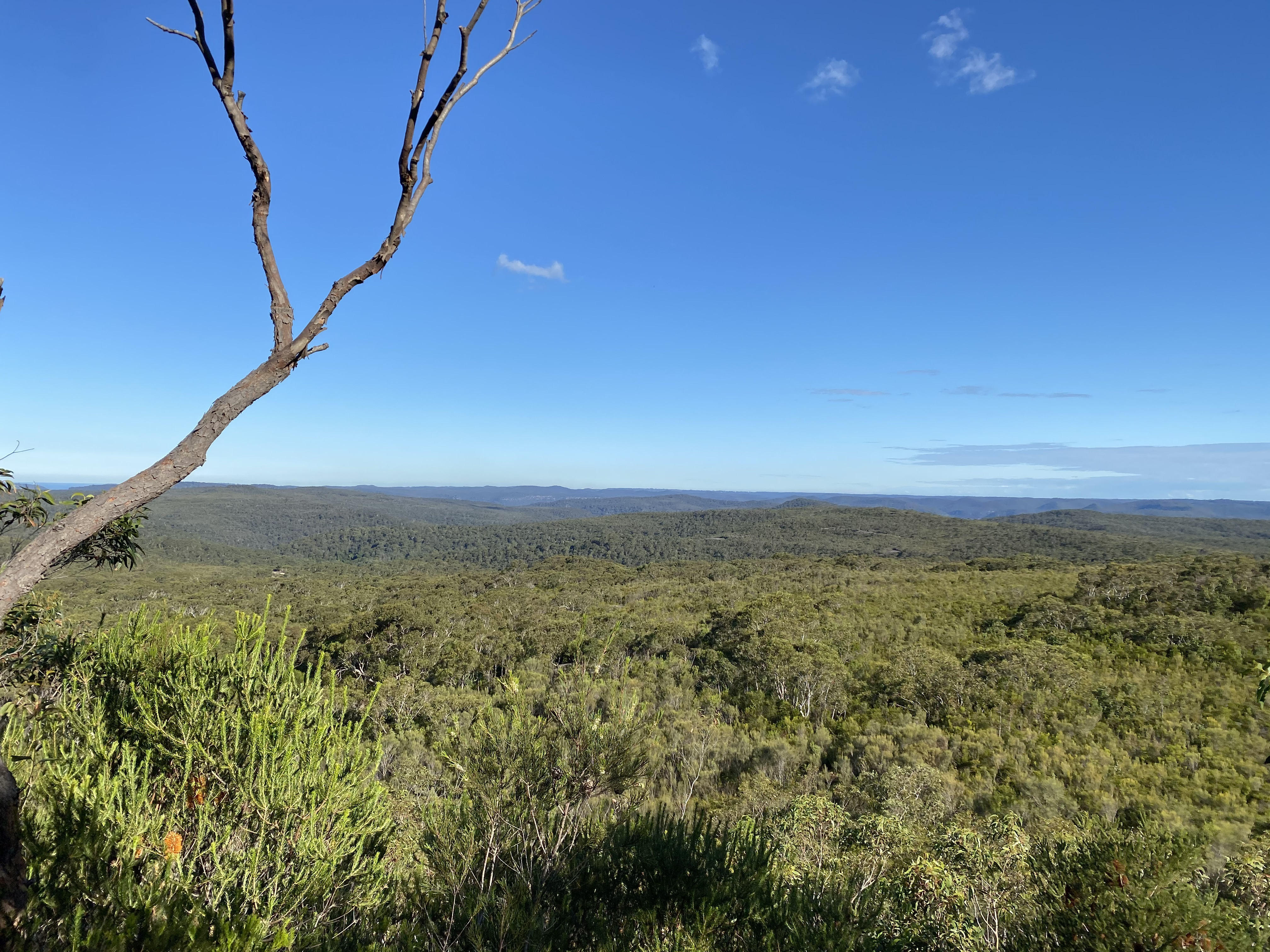Lush views