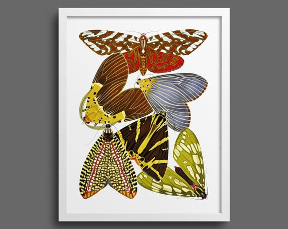 Papillons by EA Seguy - plate 14