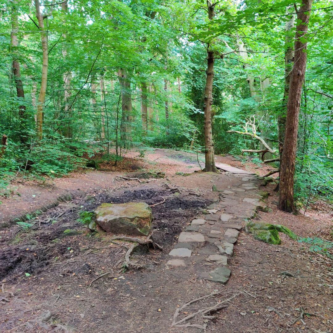Stone path through Scotland Wood