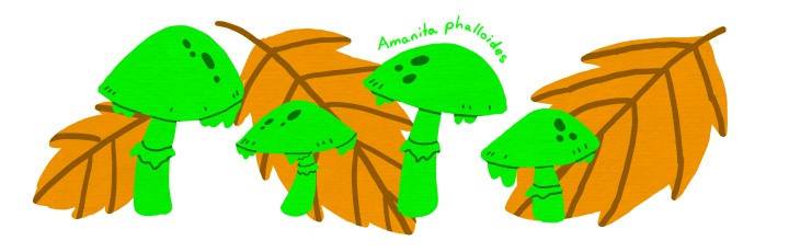 Amanita phalloides - Deathcap mushrooms