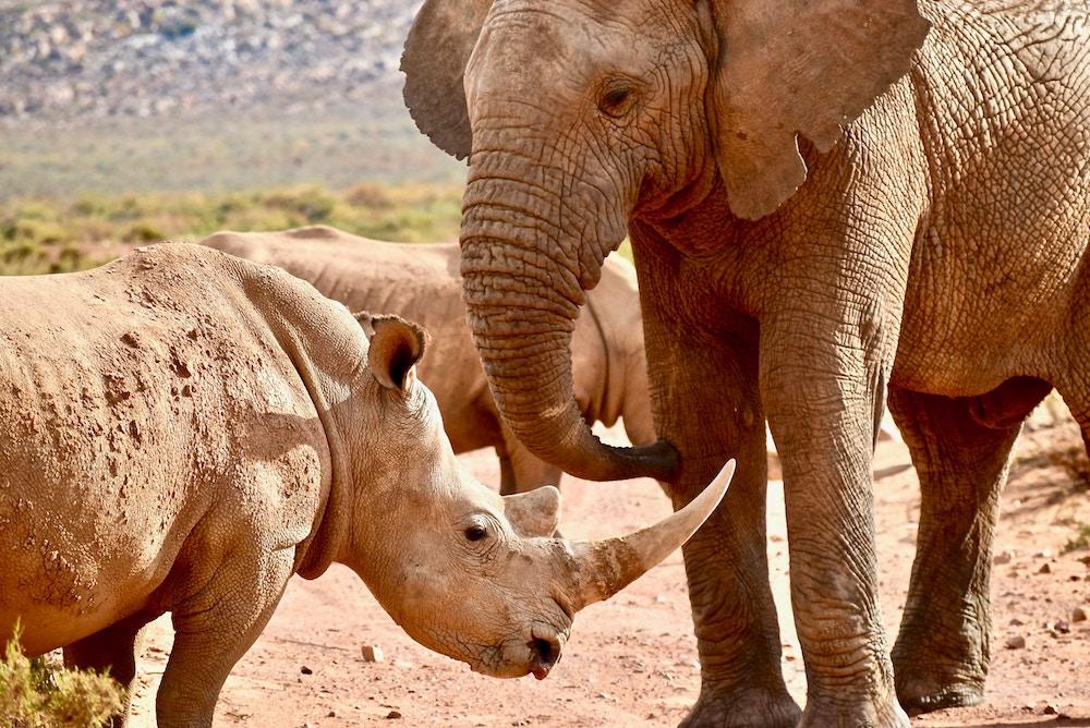 Image of rhino and elephant