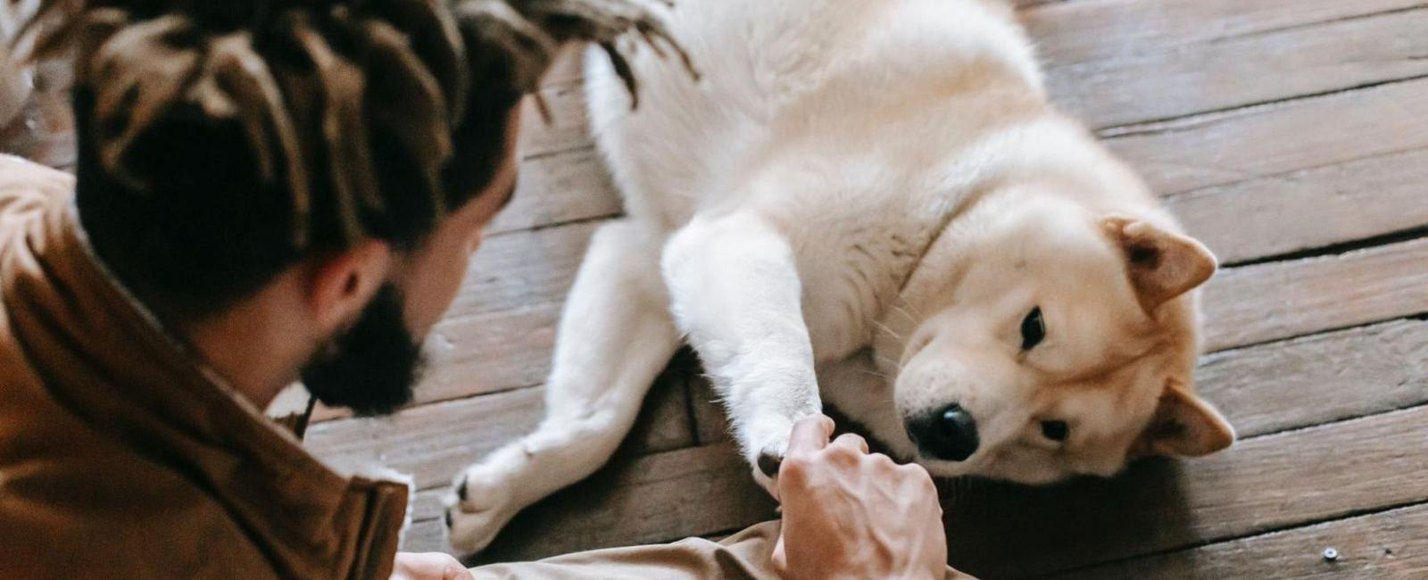 Why Do Dogs Push You Away When You Pet Them?