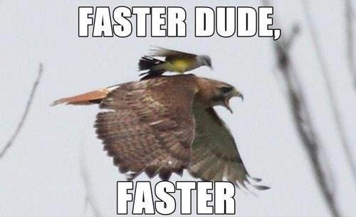 faster devhoot