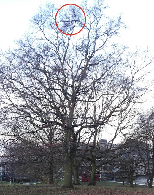 Stuck in Tree