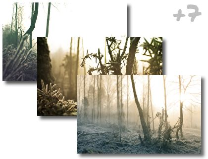 Winter Wood theme pack