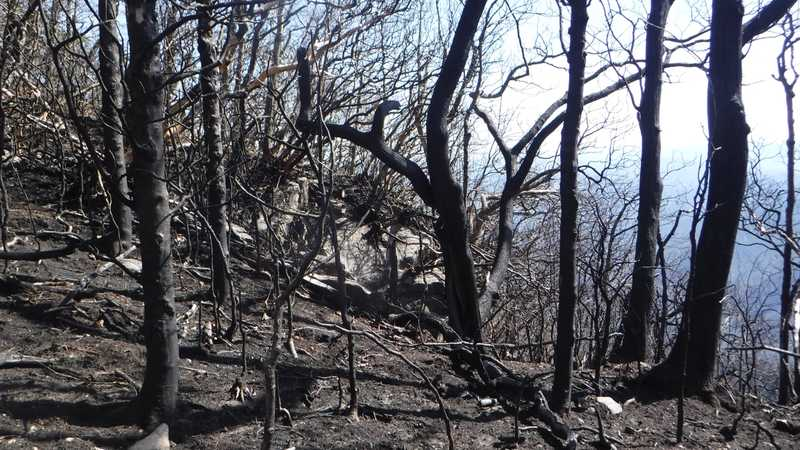 Fire damage on Standing Indian Mountain