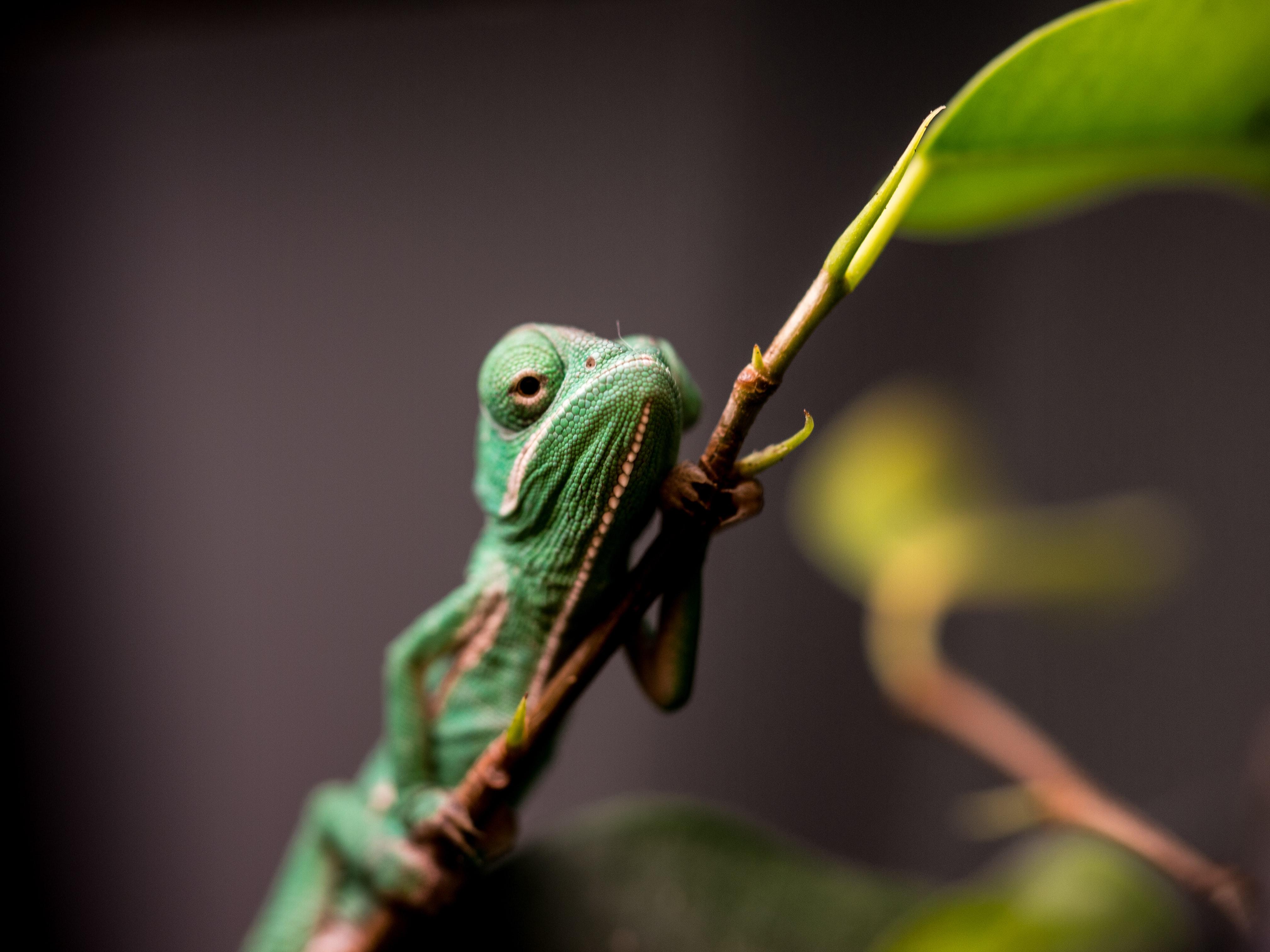 green lizard perches on twig
