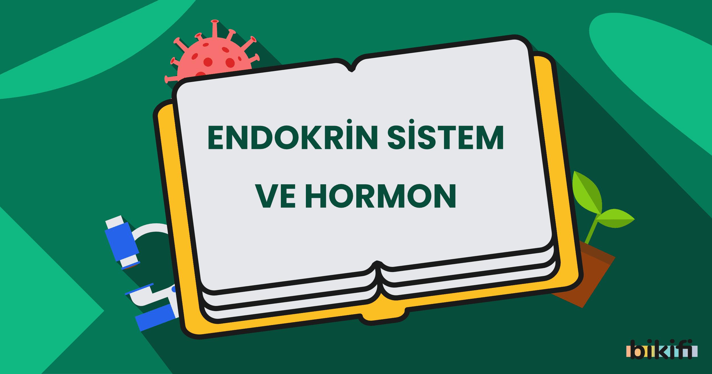 Endokrin Sistemi ve Hormon