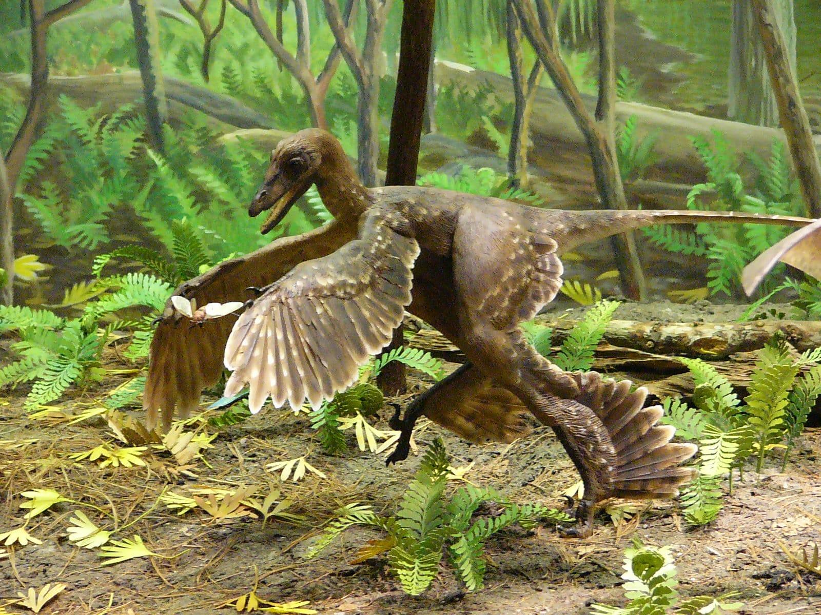 As penas dos dinossauros