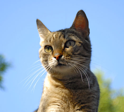 Babajagas - Katze am Dach