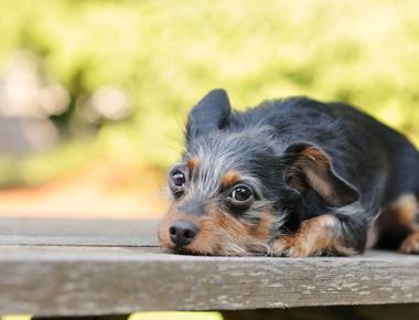 Can Dogs Sleep Outside? Is it Cruel?