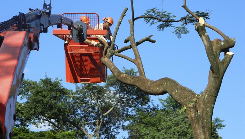 Imagem em destaque para o artigo: Precisa mesmo cortar? Entenda quando cortar uma árvore é necessário