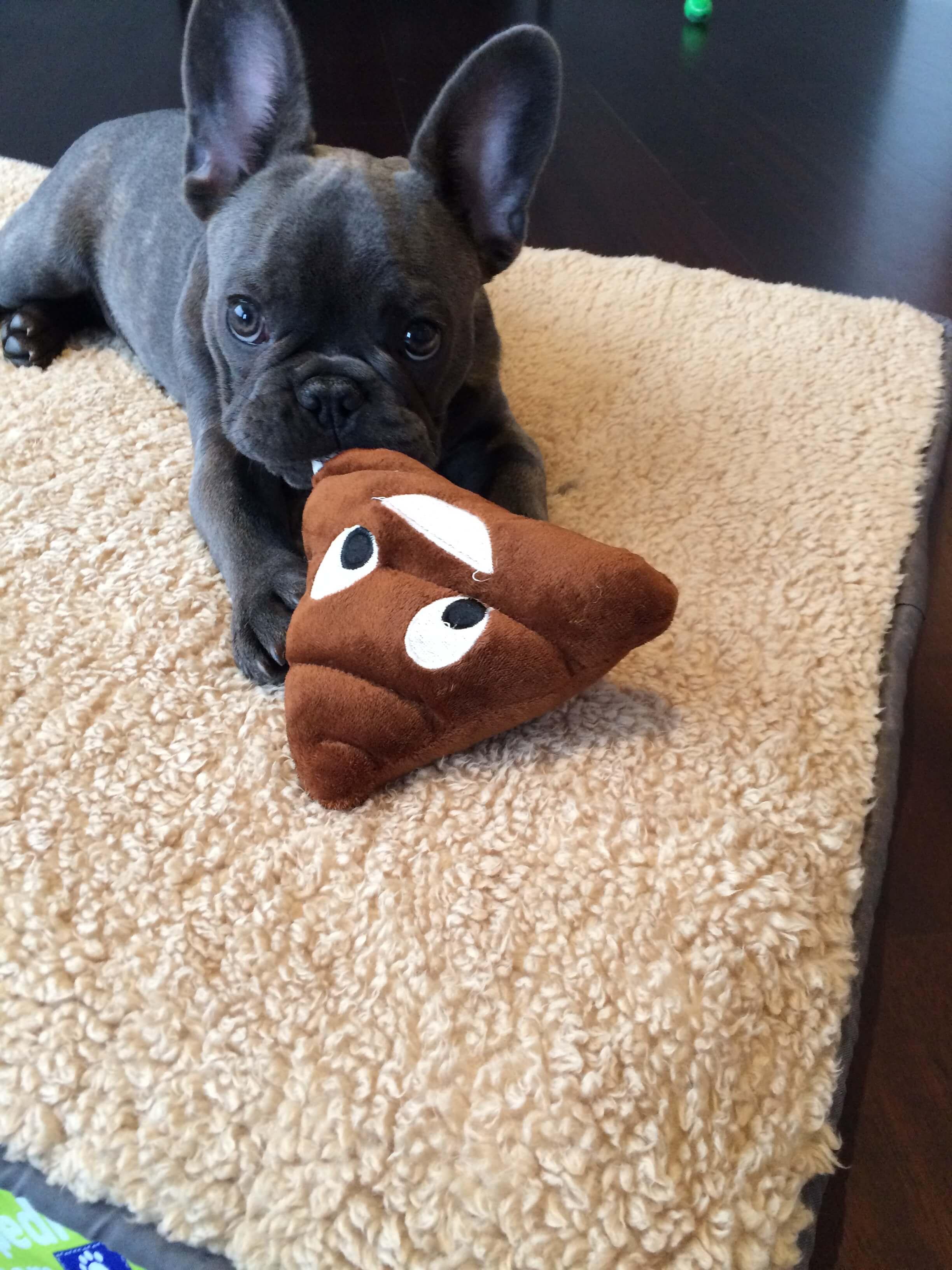 puppy training in chicago
