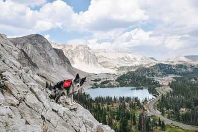 6 Dogs Share Their Favorite Hiking Gear