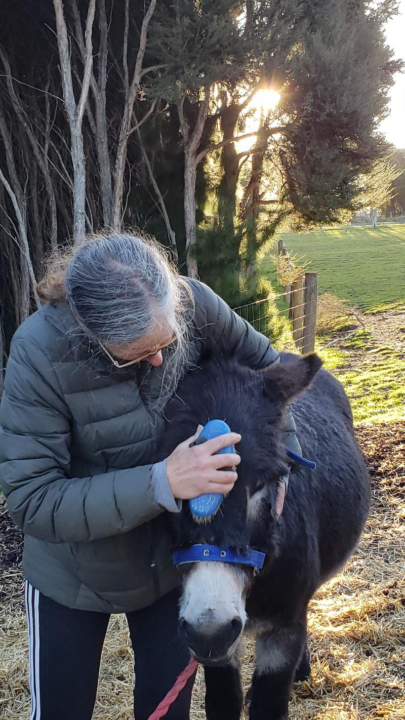 The joy of a donkey having his forehead and cowlick brushed