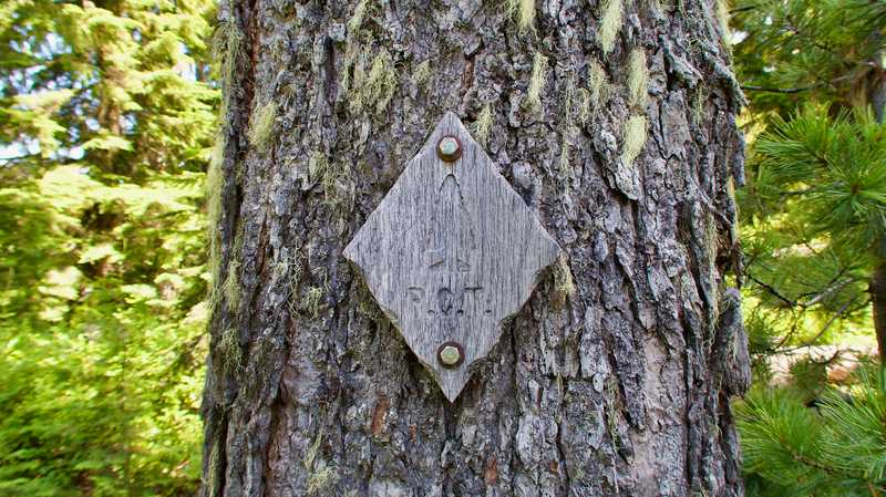 A wooden PCT marker bolted to a tree