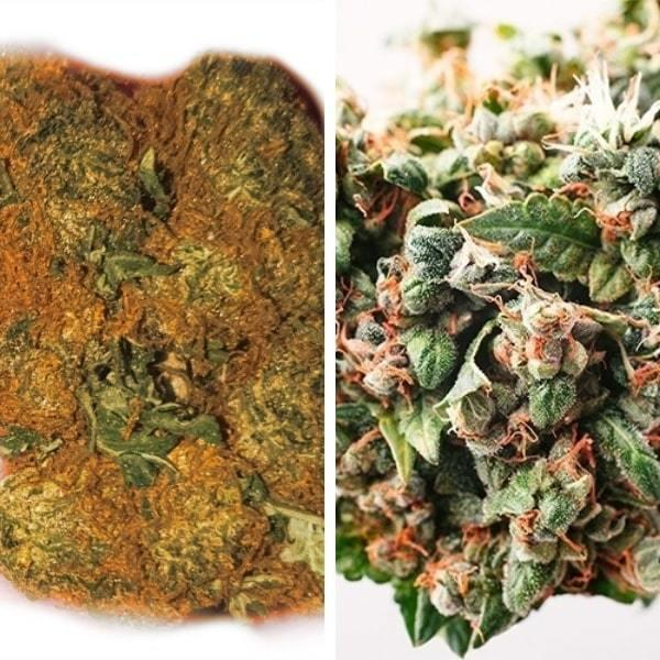 PGR Weed VS Natural Cannabis