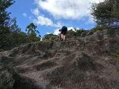 Climbing up to Maungapiko Lookout