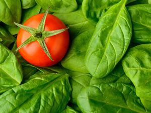 tomato-Cromwell-Plainville