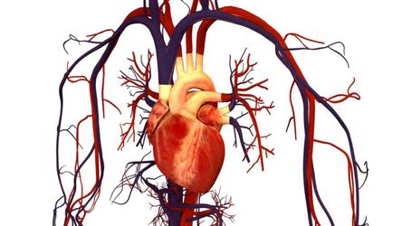 Boala coronariană | Simptome, riscuri și tratament | Centrele Ares