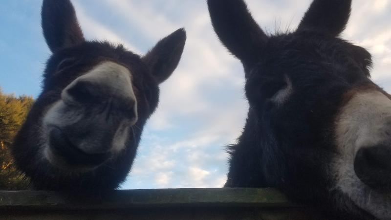Quivering donkey lips!