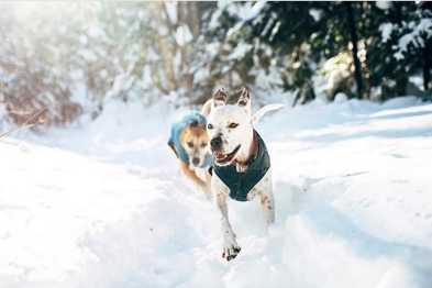 5 Dogs Who Love Winter