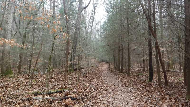 Judge Branch Trail