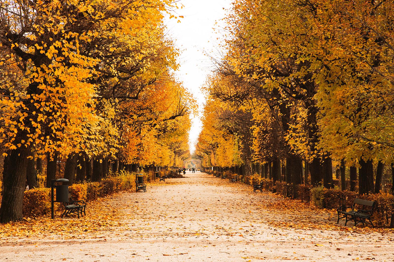 autumn leaves in a park in vienna, austria
