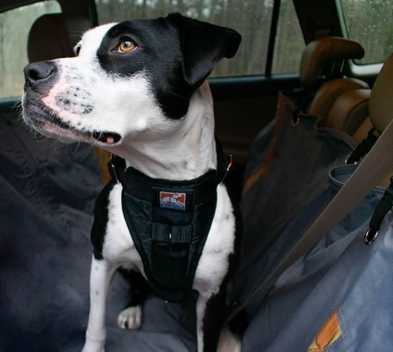 Meet the Kurgo Office Dogs!