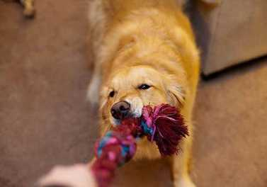 8 Ways to Stay Active With Your Dog Indoors