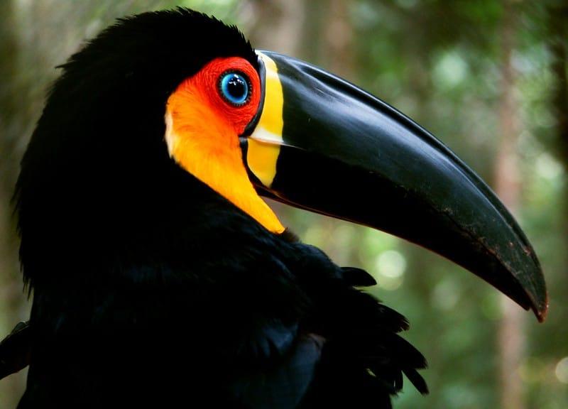 Os vários tipos de bicos das aves