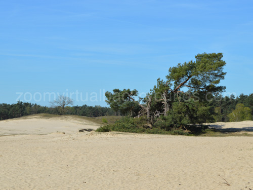 Novelty Virtual Background for Zoom on sandy beach with trees