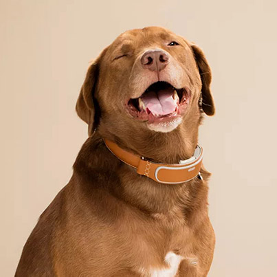 Award-Winning Smart Connected Dog Collar