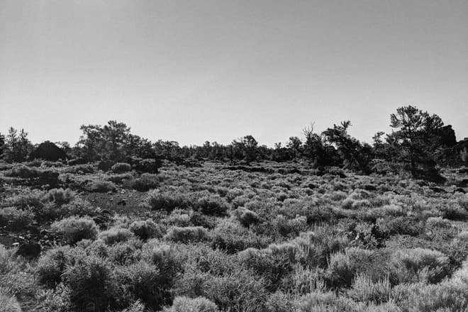 A field of desert scrub growing on an even plain of black volcanic cinders. The scrub is periodically punctuated by dark, twisted pine trees.