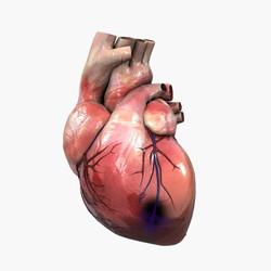 Semnele infarctului - Centrele ARES | Lider in Cardiologie