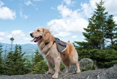 How to Choose the Right Hike for your Dog
