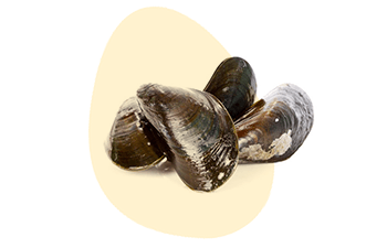 Molluscs is listed as one of the 14 major food allergens