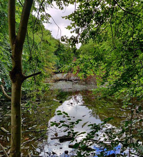Farnley Hall Fish Pond