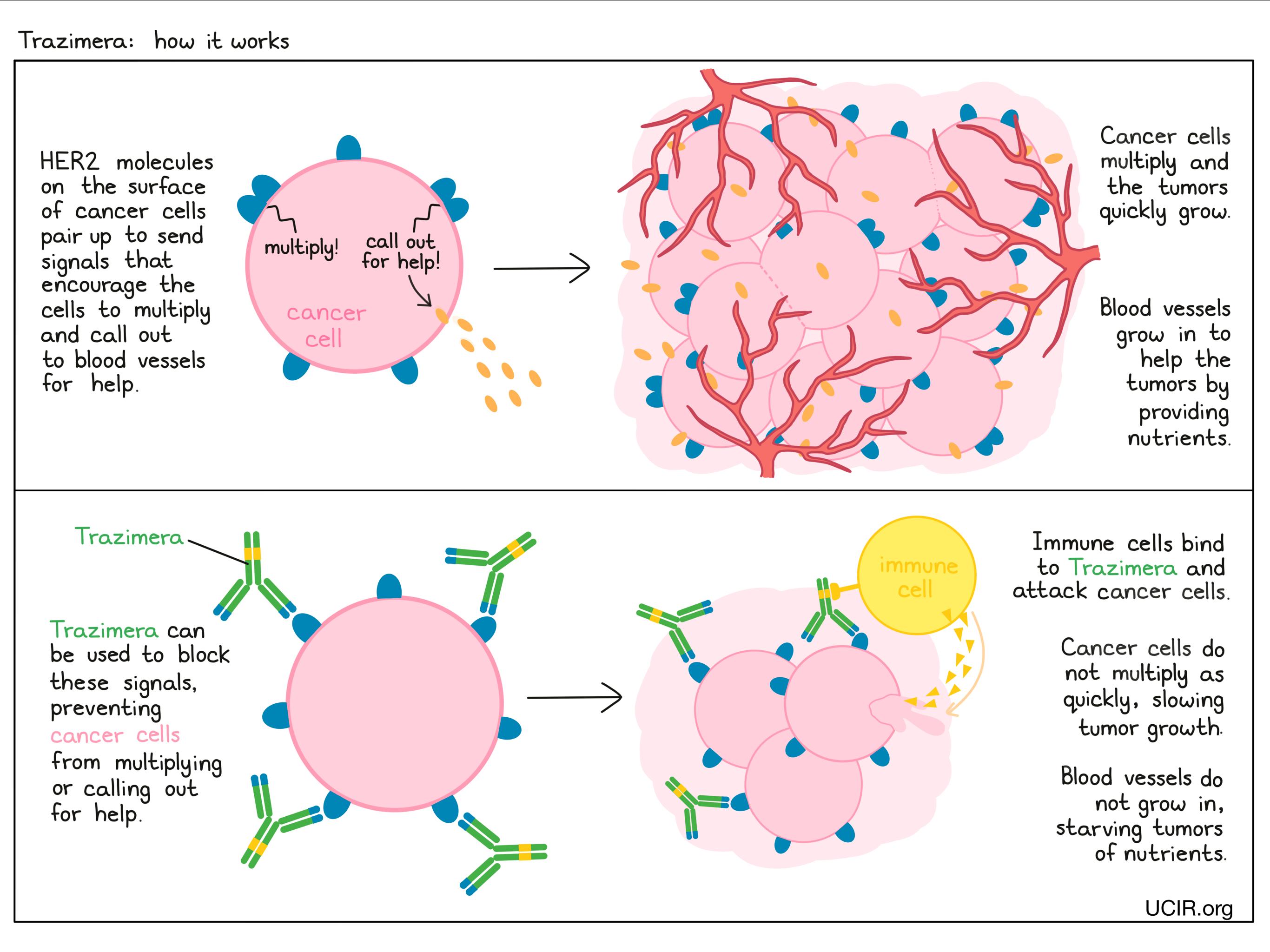 Illustration showing how Trazimera works