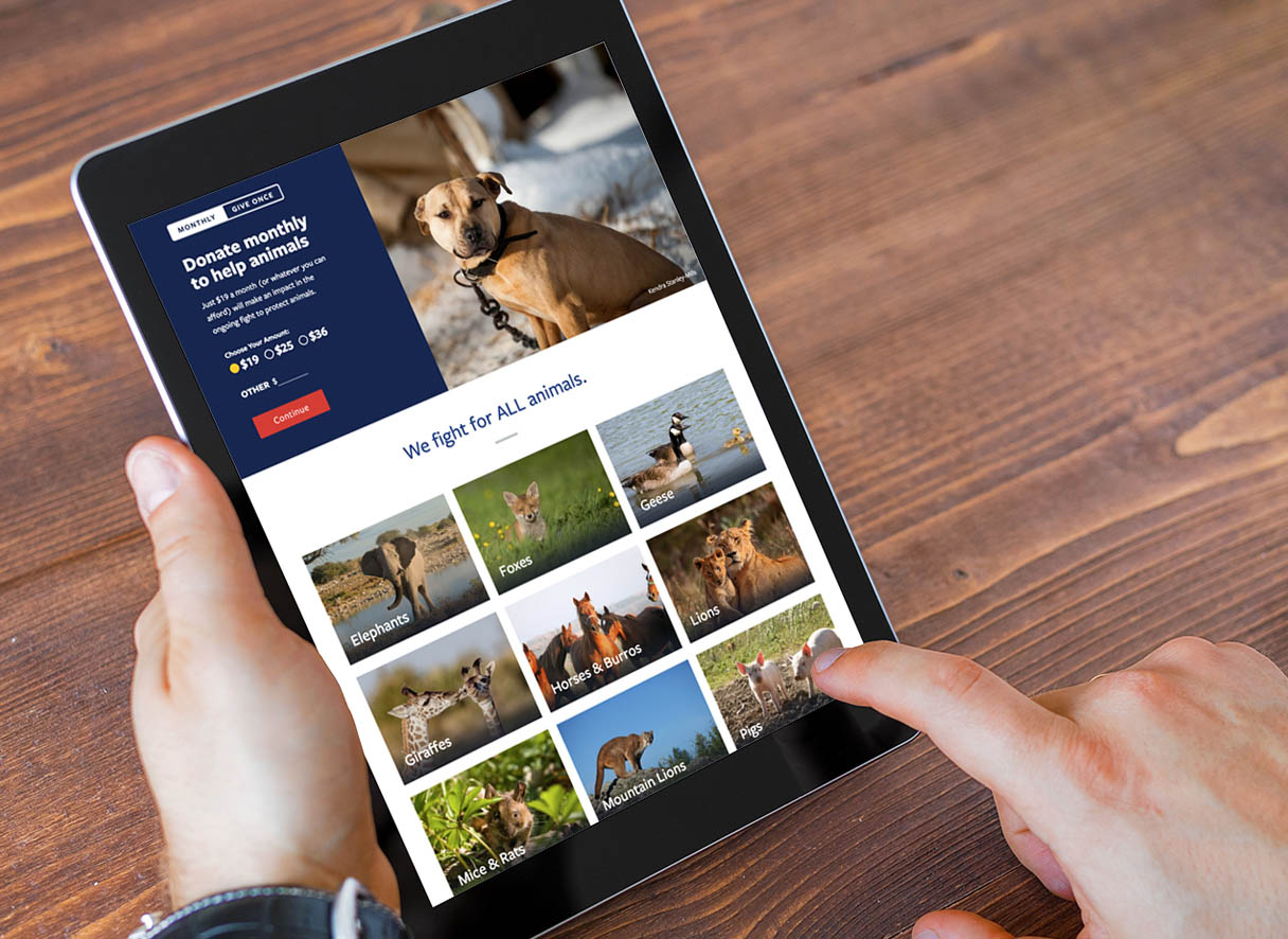 Tablet view of the HSUS website - portrait