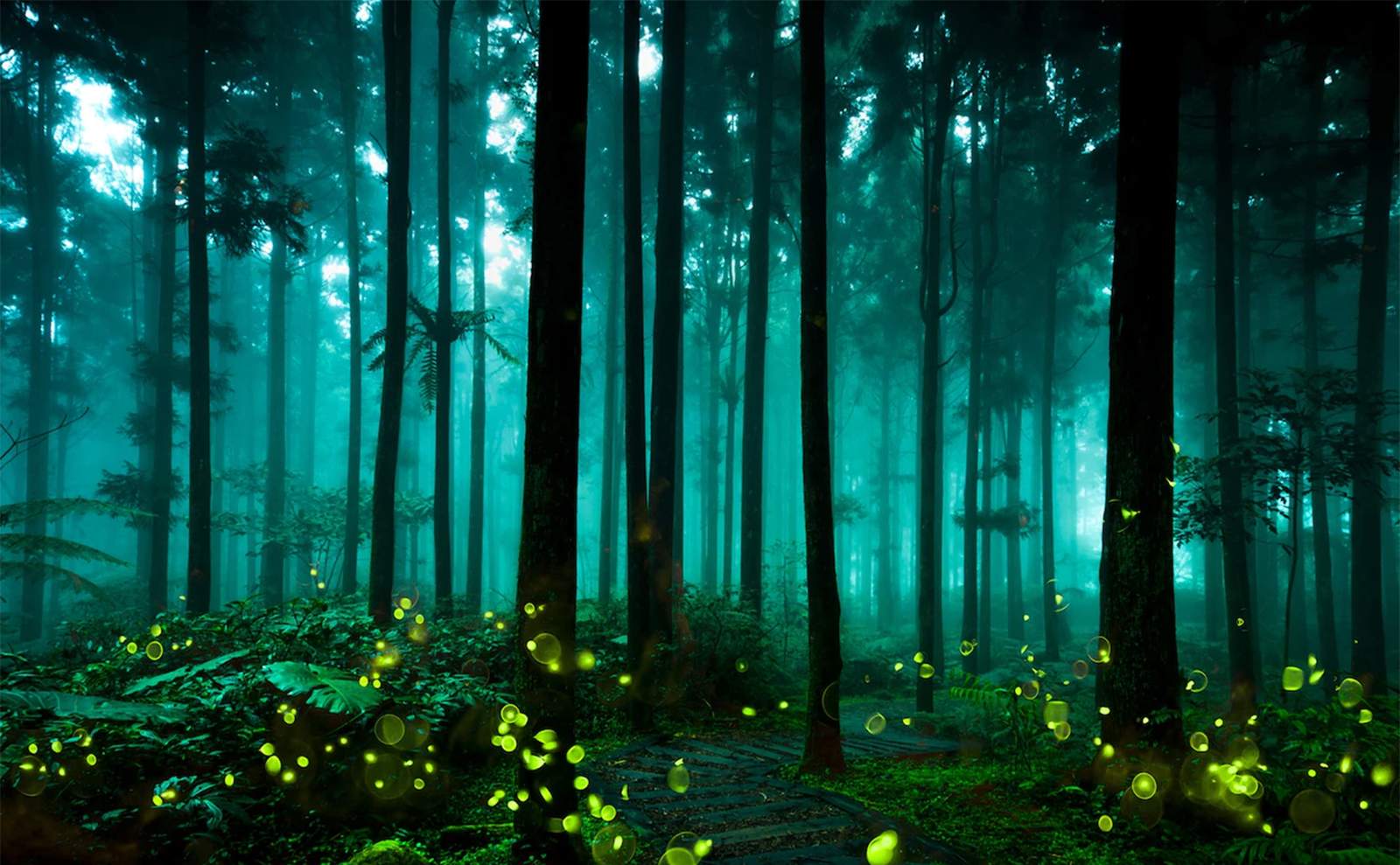 fireflies in the forest in taichung, taiwan