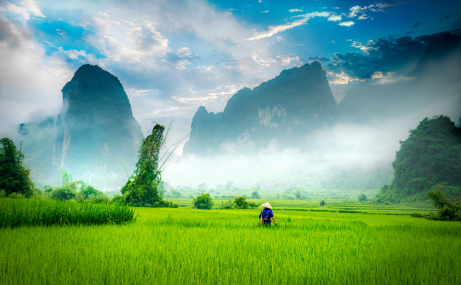 man standing in a green field in vietname