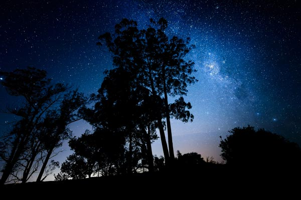 View of the stars above silhouetted trees at night.