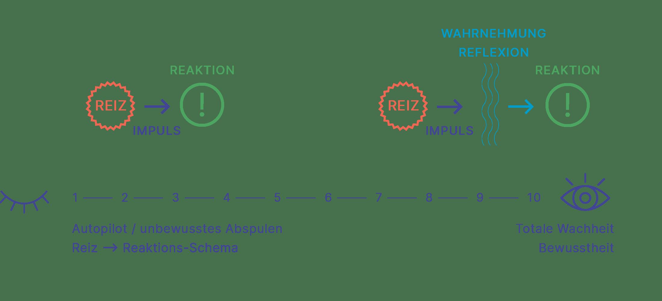 Das Reiz-Reaktionsschema