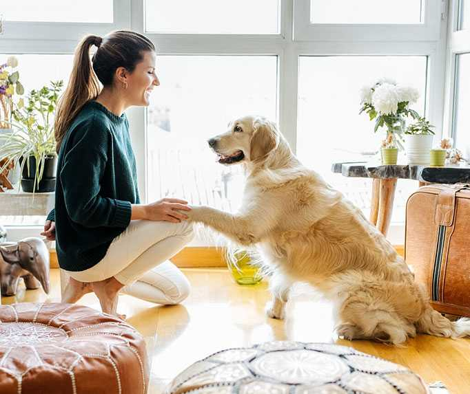 Woman Playing With Her Emotional Support Dog In The Living Room
