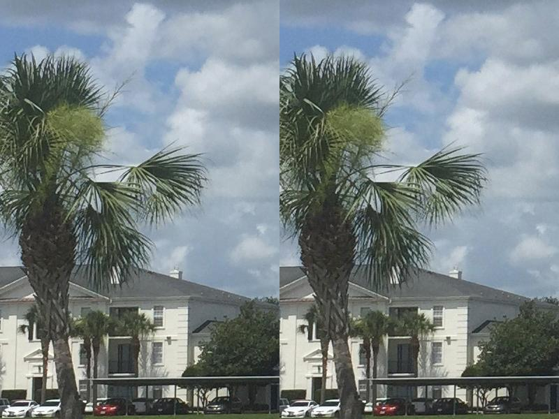 Original (left) and Google Photos Compressed (right) at 100% zoom side-by-side